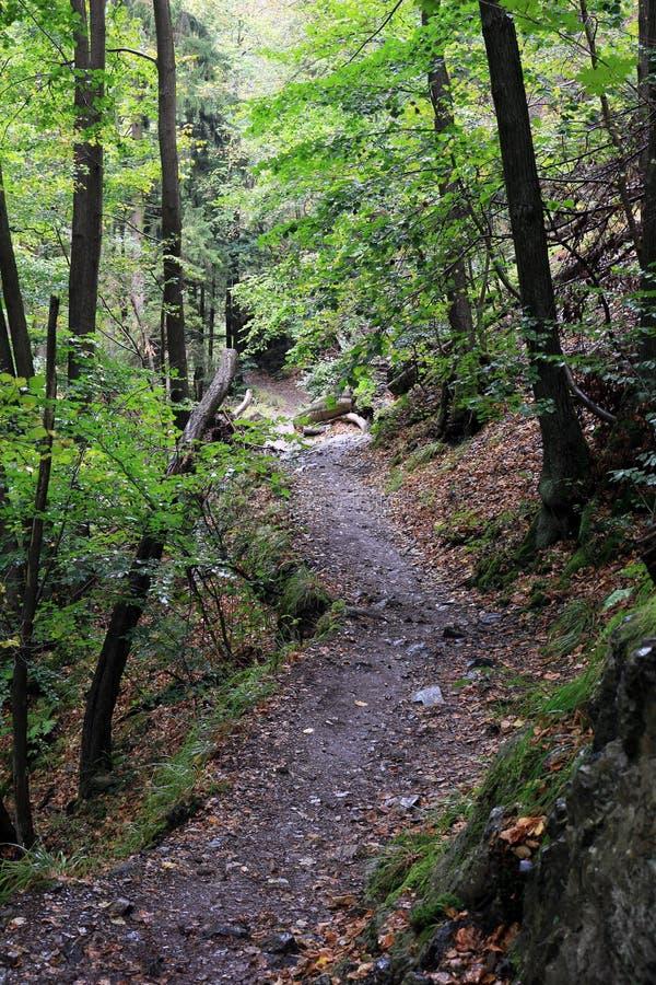 ` De Harzer Hexenstieg del ` de la pista de senderismo en las montañas de Harz foto de archivo