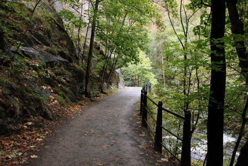 ` De Harzer Hexenstieg del ` de la pista de senderismo en las montañas de Harz imagen de archivo libre de regalías