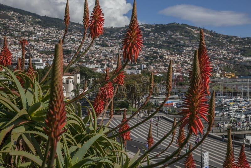 De haven van Funchal - zonnig December in Madera; aloëbloemen stock afbeeldingen