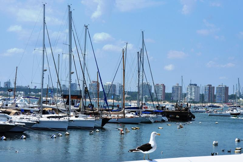 De Haven van Montevideo - Uruguay royalty-vrije stock afbeeldingen