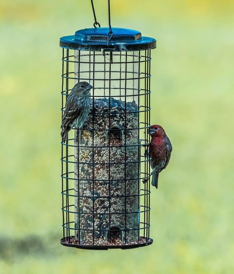 De heer en Mevr Huis Finch Have Breakfast royalty-vrije stock foto