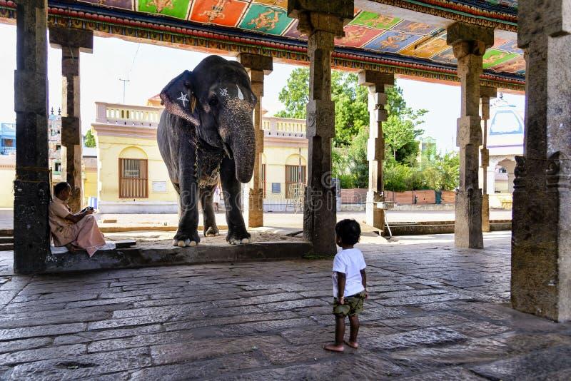 De heilige olifant en het jonge geitje bij Hindoese tempel, India stock foto
