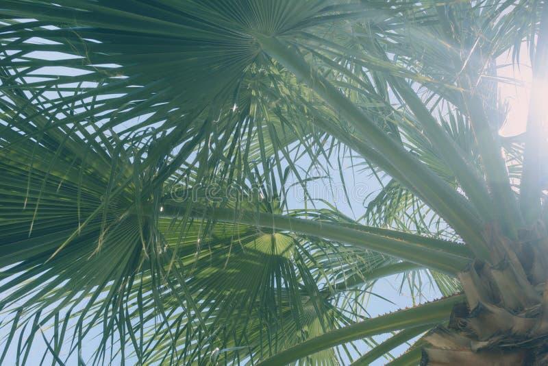 De heldere achtergrond van de zomer Groene takken van een palm Een foto met een gloed van de zon royalty-vrije stock afbeelding