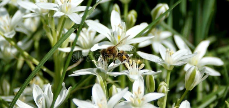De heldere bloemen zijn volledig van vitaliteit stock foto