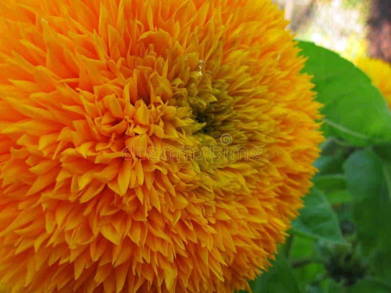 De heldere dag van de bloemzomer Bloemblaadjesclose-up Macroschoonheid van aard royalty-vrije stock foto