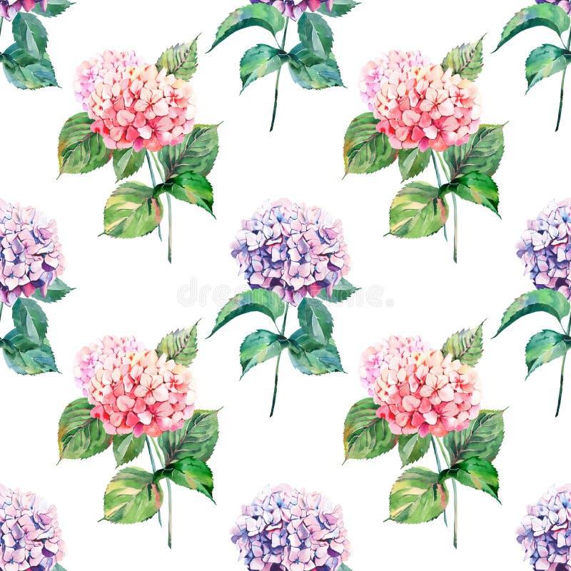 De heldere elegante prachtige kleurrijke tedere zachte roze kruiden bloemenhydrangea hortensia van de de zomerherfst bloeit met g vector illustratie