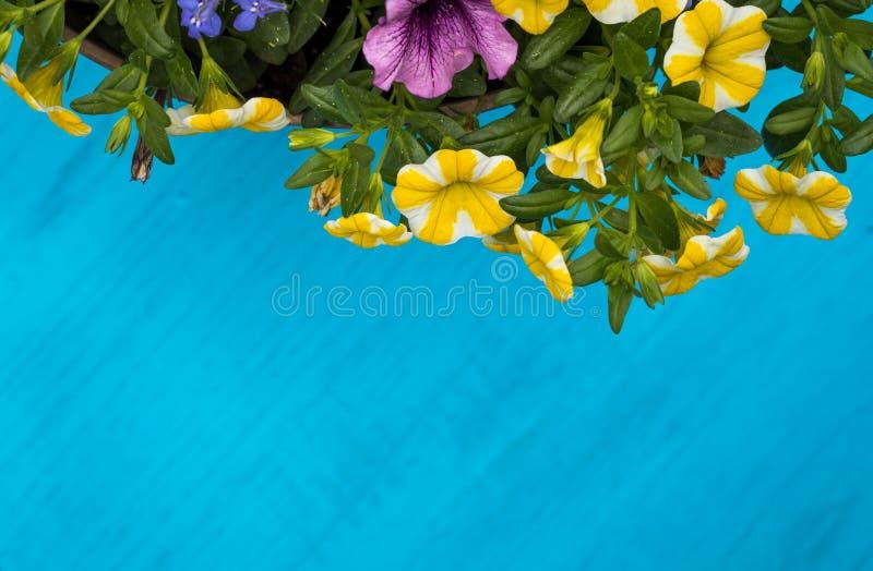 De heldere en vrolijke de lente en de zomerbloemen op blauwe houten vlakke raad, leggen, ruimte voor tekst stock fotografie