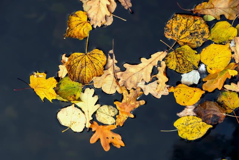 De heldere herfst verlaat close-up op koud donker water, geel en oranje gebladerte Concept de herfst komst Moderne Achtergrond stock foto