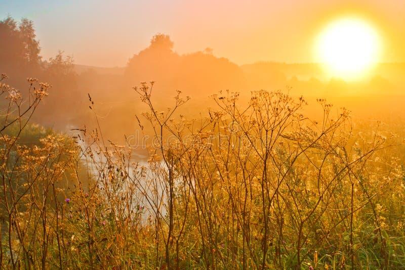 De heldere hete zon vult het kader met helder licht, gras, rivier stock fotografie