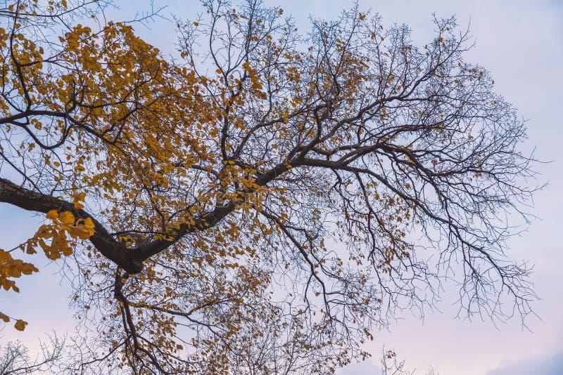 De heldere kronen van de de herfstboom, die in de wind de laatste bladeren, droge leafless takken vliegen royalty-vrije stock foto