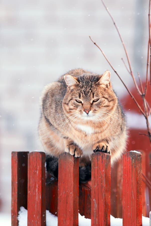 De heldere mooie straat gestreepte kat zit in de vroege lente op een wo royalty-vrije stock afbeeldingen