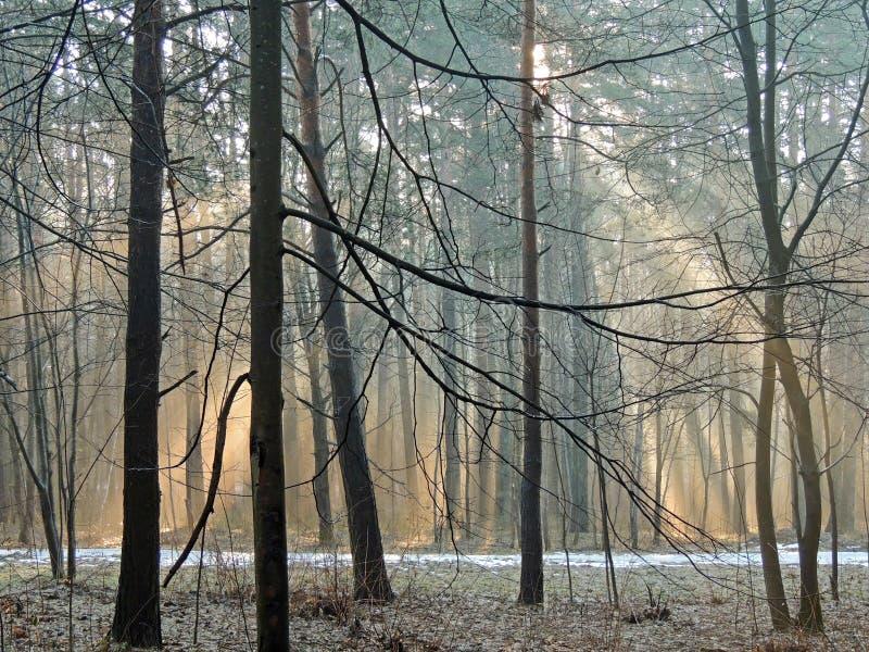 De heldere ochtendkleuren in de de lente bosmist maart stock fotografie