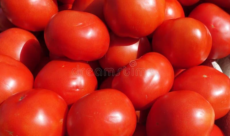 De heldere rode tomaten van Florida bij een fruit en een plantaardige tribune op een de landbouwersmarkt van de Zaterdagochtend stock fotografie
