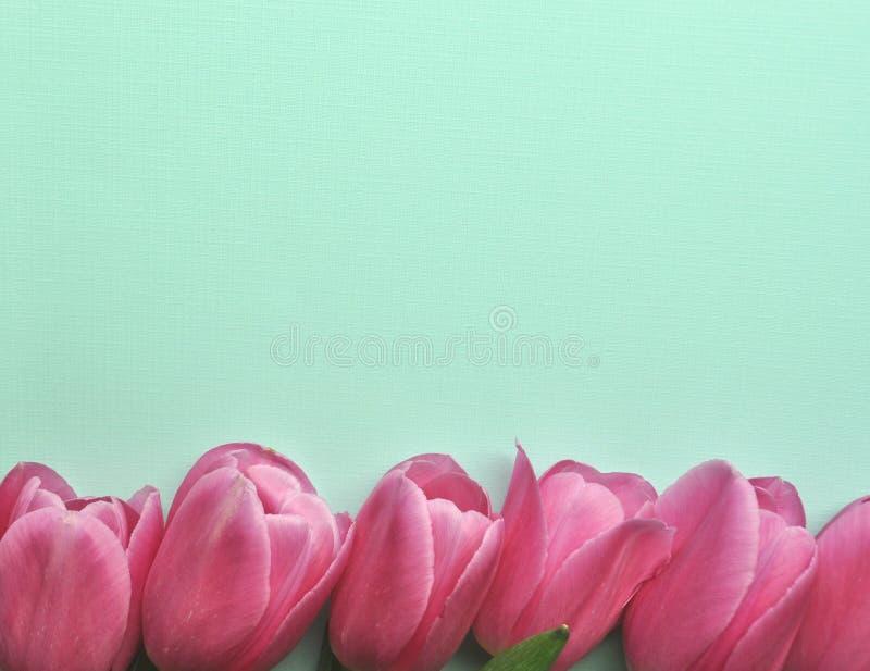 De heldere roze grens van de tulpenbloem op roze hartachtergrond met tekst en exemplaarruimte royalty-vrije stock afbeeldingen