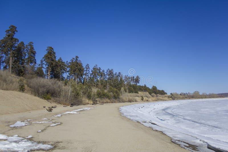 De heldere zandige kust van een bevroren meer met sneeuw en droge struiken tegen de achtergrond van hoge groene naaldbomen onder  royalty-vrije stock foto's