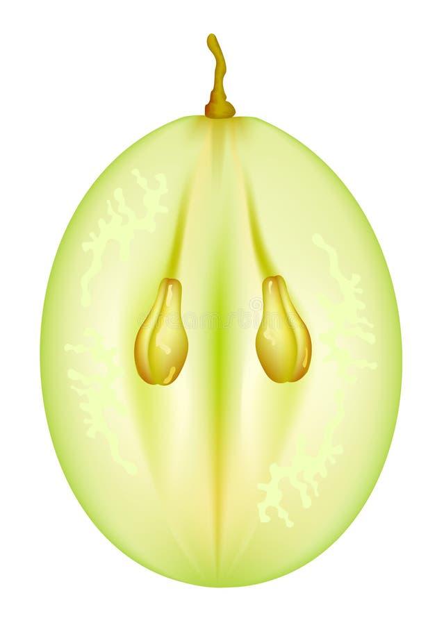 De helft druiven met zaden. royalty-vrije illustratie
