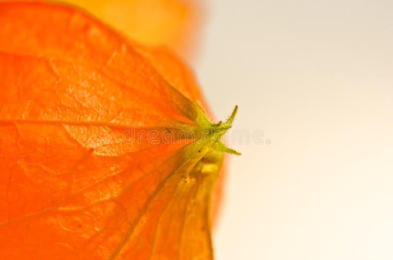 De helft van een mooie oranje kers van de aardbeigrond wordt geschikt in de linkerkant van het beeld De andere helft van het beel stock foto