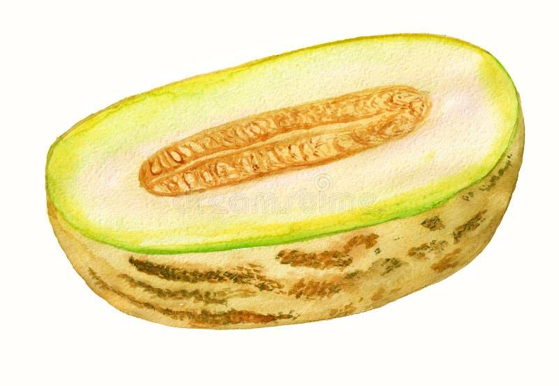 De helft van meloen royalty-vrije illustratie