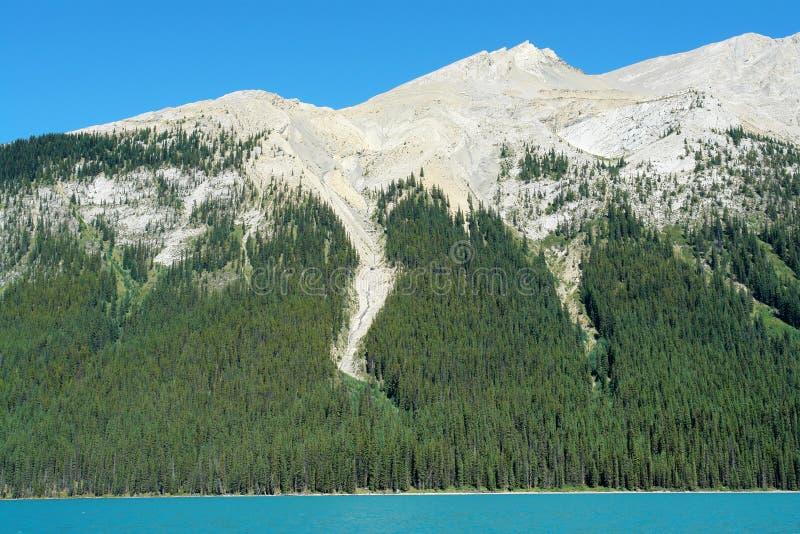 De helling en het bos van de berg royalty-vrije stock foto