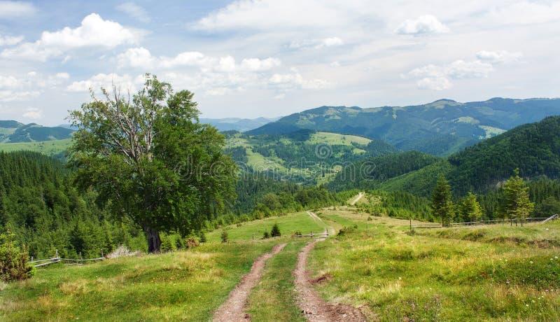 De hellingen van de Karpatische bergen Het landschap van groene heuvels stock afbeeldingen