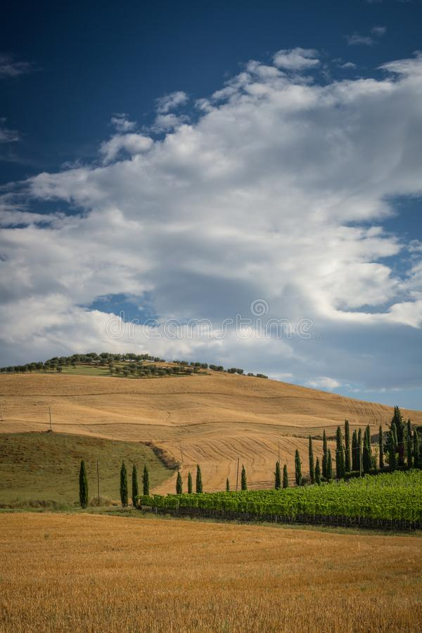 De hellingen van Toscanië met cipres en olijfbomen royalty-vrije stock afbeelding