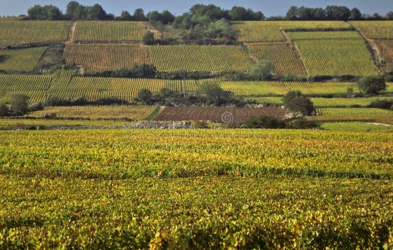 De hellingsvinyards van de kooi d'Or, Bourgondië stock foto's