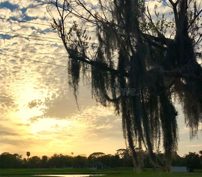 De hemel en de mossen stock afbeeldingen