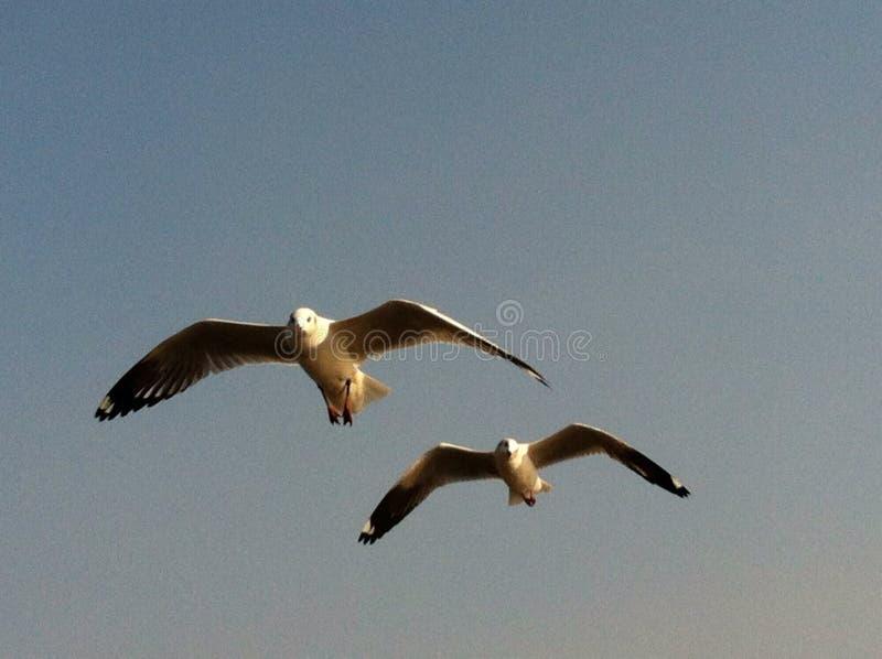 De hemel van de de hoopliefde van aardvogels stock foto