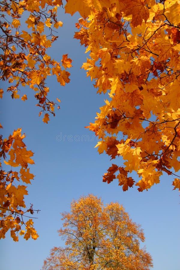 De hemel van de herfst royalty-vrije stock foto