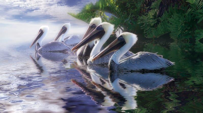 De Hemel van de pelikaan stock foto's