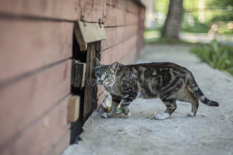 De hemlösa djuren royaltyfri fotografi