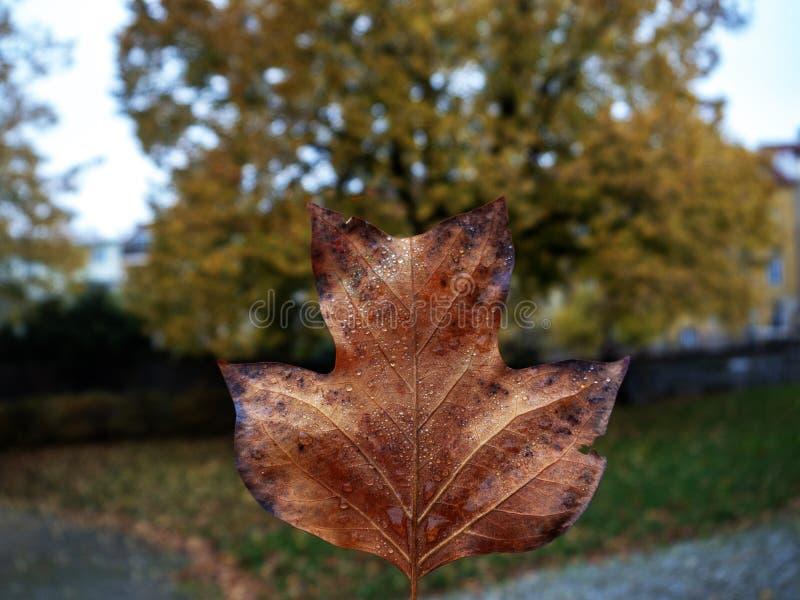 De herfst één blad royalty-vrije stock foto