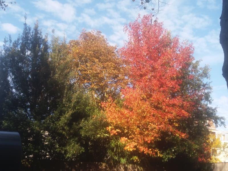 De herfst stock illustratie