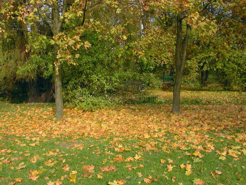 Download De herfst stock afbeelding. Afbeelding bestaande uit struiken - 25031