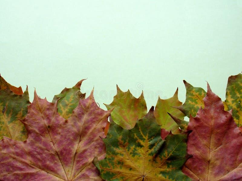 De herfst royalty-vrije stock foto's