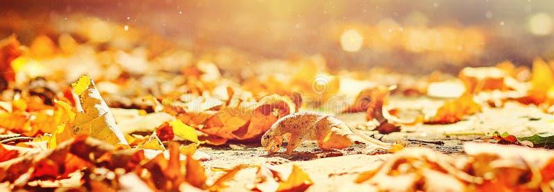 De herfst banner Achtergrond van de herfstbladeren in een Park op aarde, gele bladeren in de herfstpark Bladeren van de de herfst royalty-vrije stock foto's