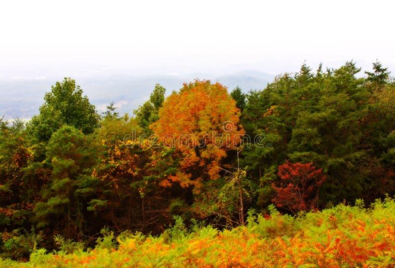 Download De herfst in bergen stock foto. Afbeelding bestaande uit bladeren - 275550