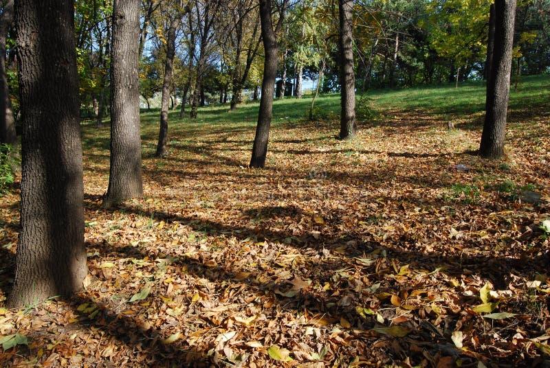 De herfst bij het park stock fotografie