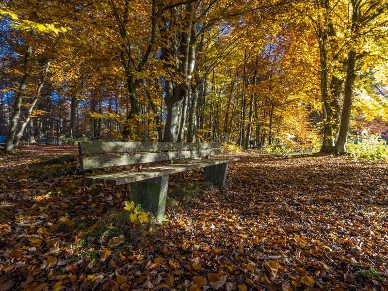 De herfst bij Meer Starnberg, Beieren, Duitsland royalty-vrije stock fotografie