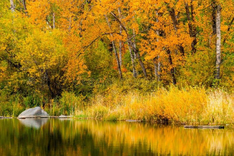 De herfst bij Tims-Vijver in de staat van Washington royalty-vrije stock afbeeldingen