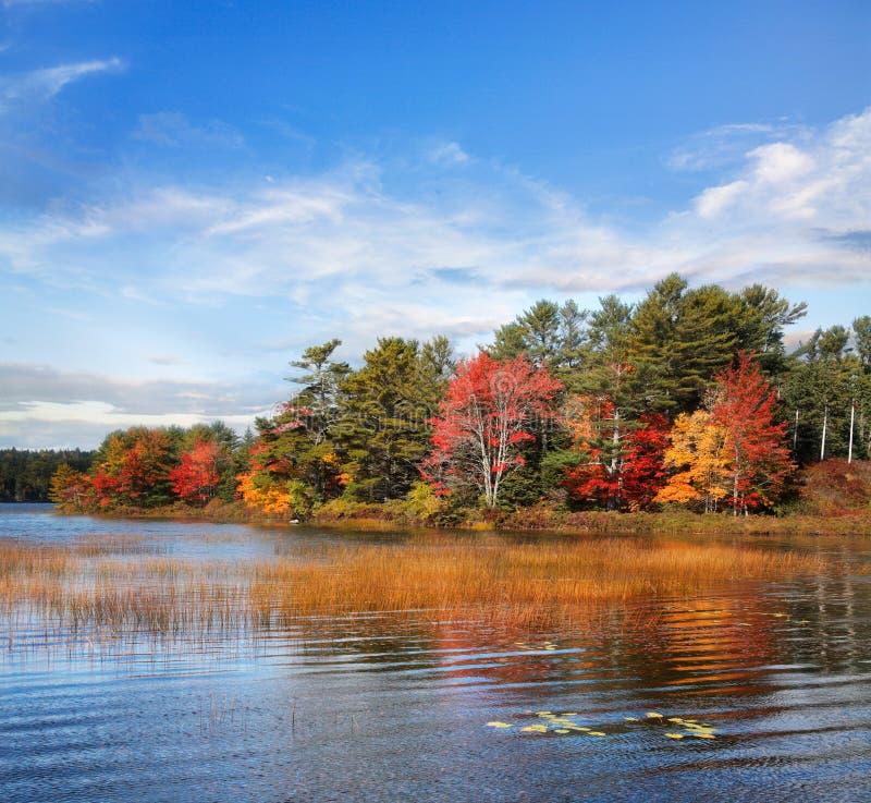 De herfst bij Vijver Somes stock afbeelding