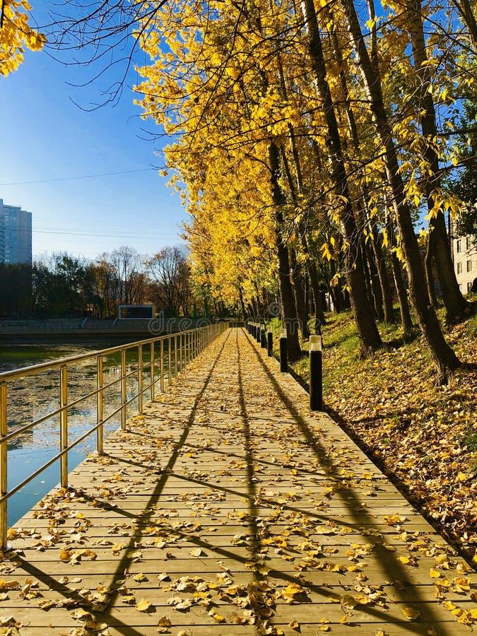 De herfst, bladdaling stock afbeelding