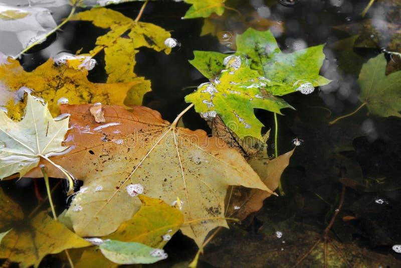 De herfst De bladeren van de herfst in water stock foto's