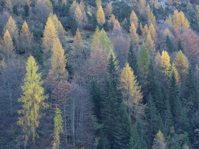 De herfst in bomen stock afbeelding