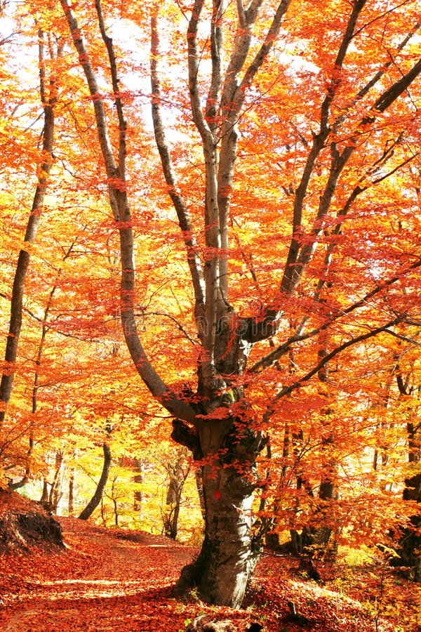 De herfst in bos royalty-vrije stock fotografie