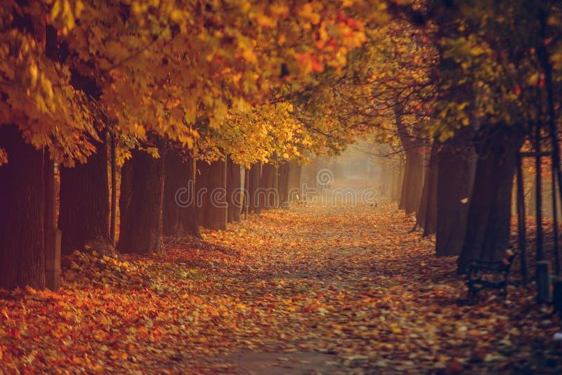 De herfst bos gouden vrije tijd royalty-vrije stock foto's