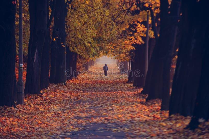 De herfst bos gouden vrije tijd stock foto