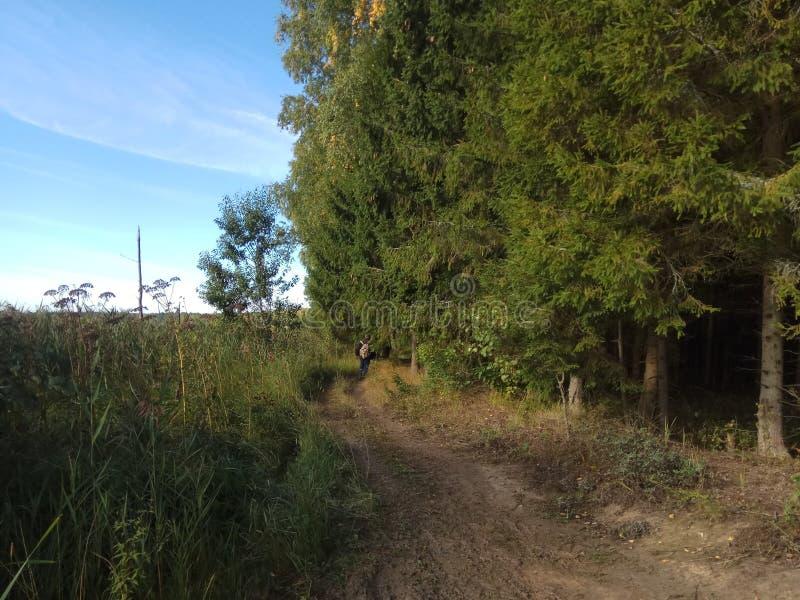 De herfst Bos landschap Blauwe hemel en bomen met gele bladeren en geen bladeren horizon natuurlijke achtergrond van Rusland royalty-vrije stock afbeeldingen