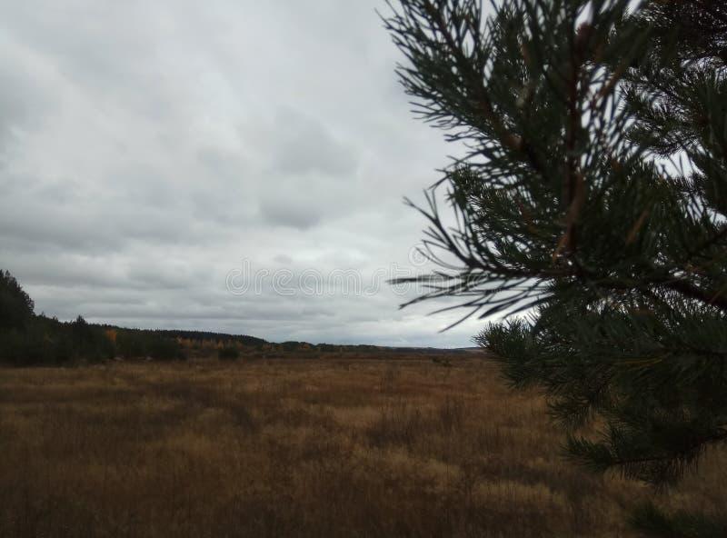 De herfst Bos landschap Blauwe hemel en bomen met gele bladeren en geen bladeren horizon natuurlijke achtergrond van Rusland stock fotografie