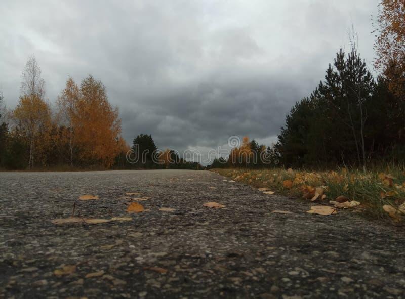 De herfst Bos landschap Blauwe hemel en bomen met gele bladeren en geen bladeren horizon natuurlijke achtergrond van Rusland royalty-vrije stock afbeelding